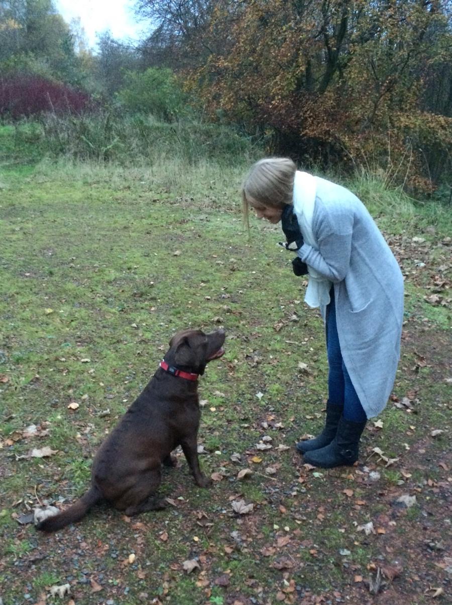 Labrador-dog-walk-outfit