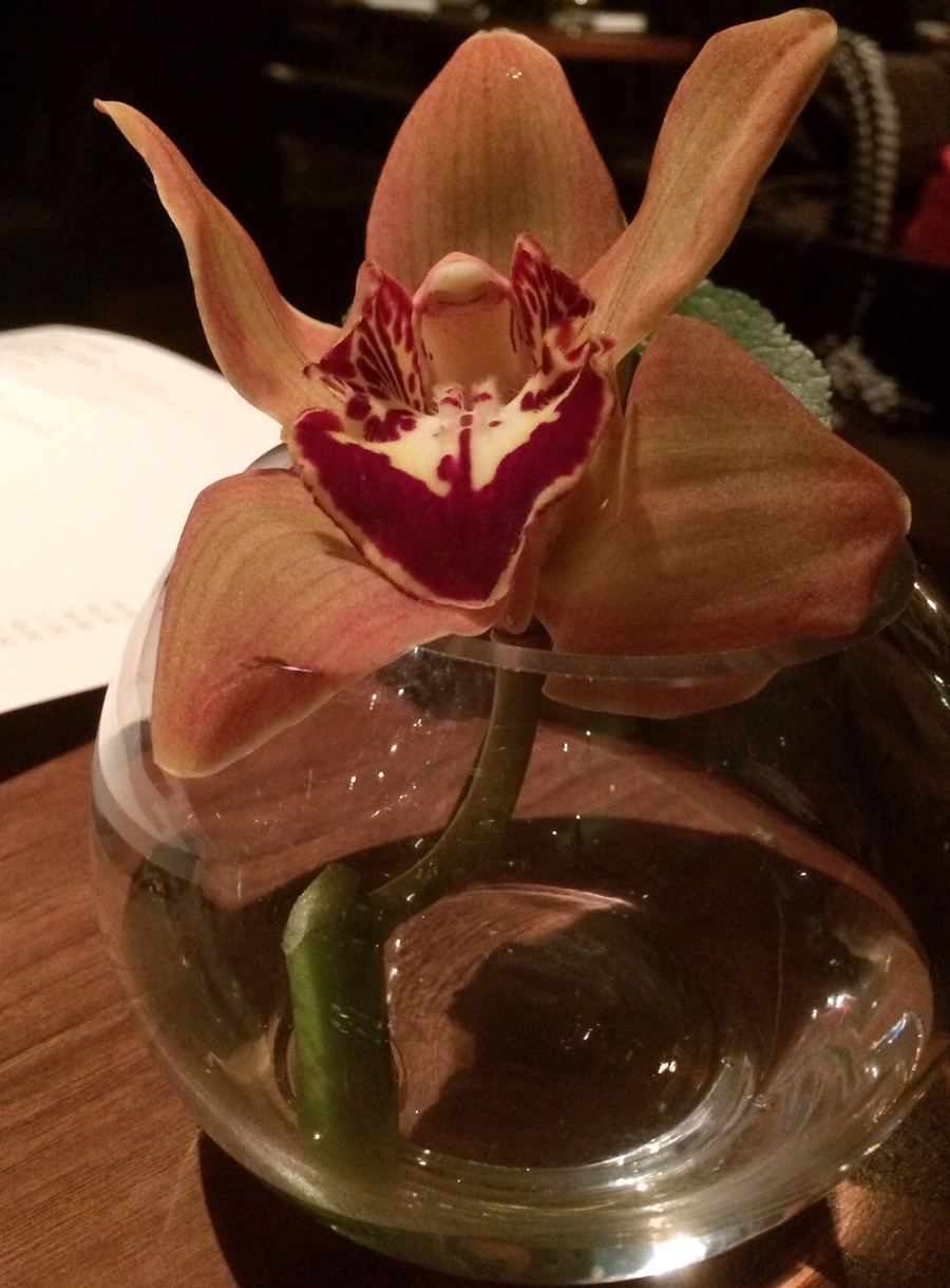 Orchid-Tempus-Edinburgh