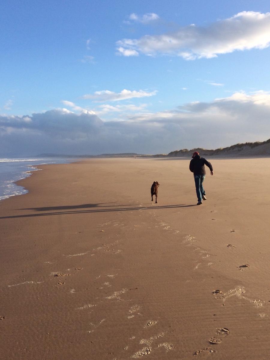 Scottish-beach-labrador-playing