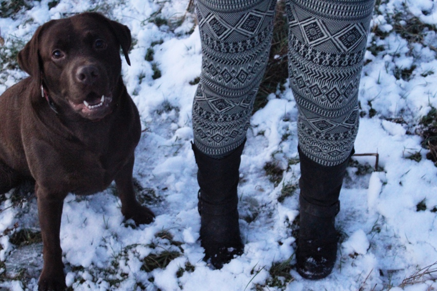Winter-leggings-snow-labrador