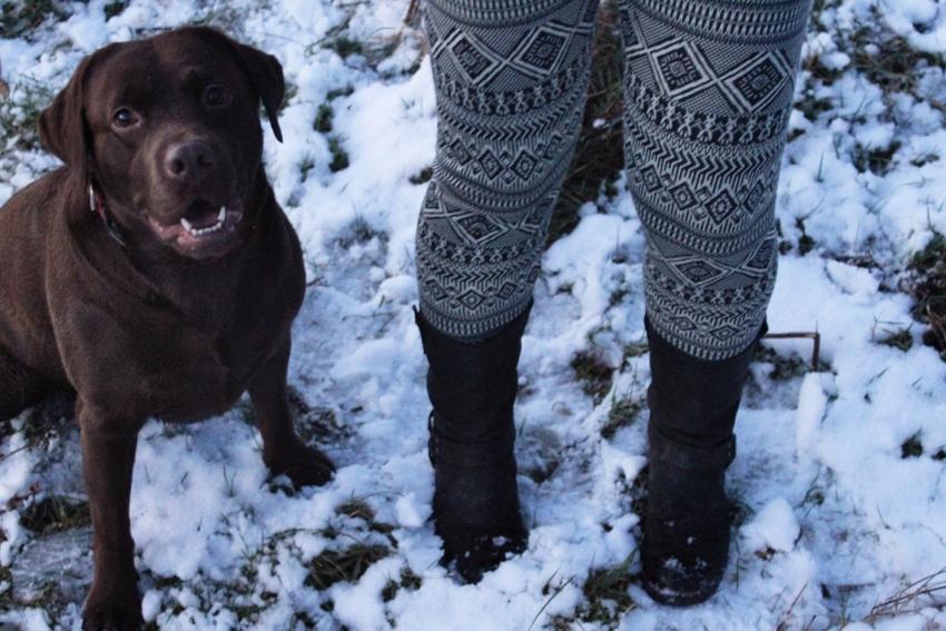 Winter-leggings-snow-labrador