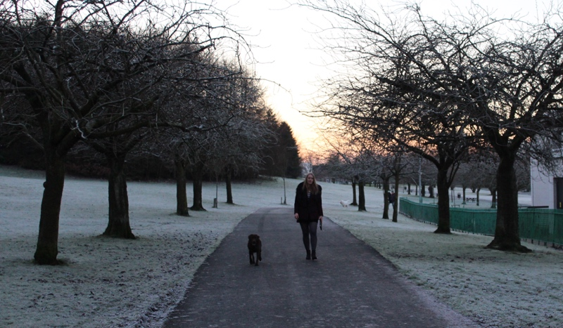 Winter-walk-Glasgow-labrador