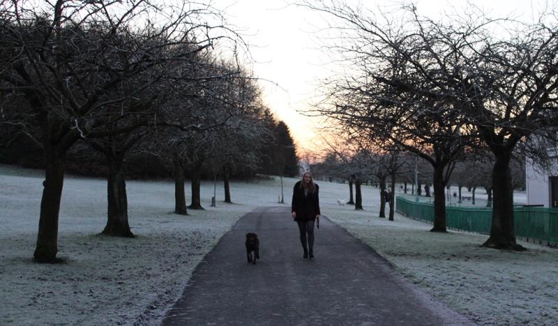 Winter-walk-Glasgow-labrador
