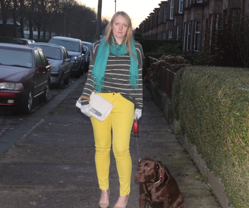 Yellow-jeans-stripe-knit-chocolate-labrador