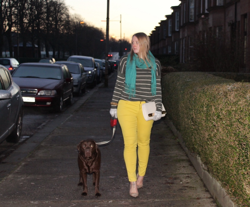 Yellow-jeans-stripe-knit-labrador-walk-Glasgow
